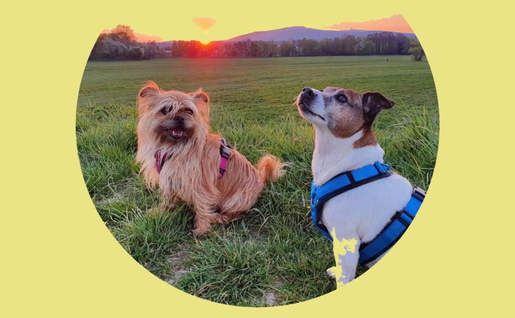 Rusty und Noelle